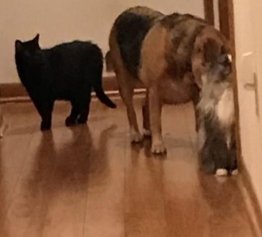 Wedgie, Luna, and Georgie curious about a new arrival.