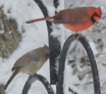 Mr. and Mrs. Cardinal