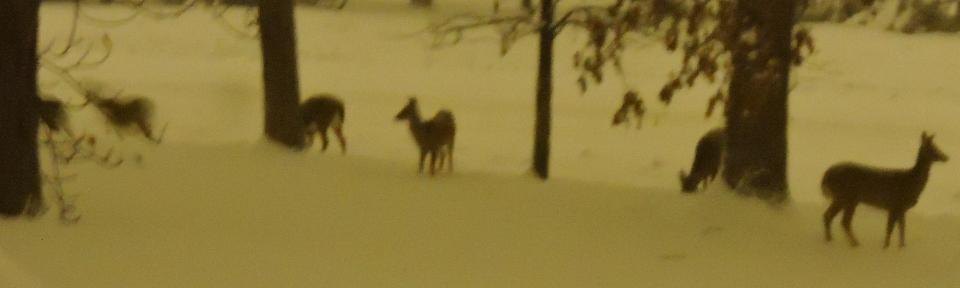 Six deer in our front yard!