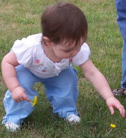 Picking dandelions for Mommy.